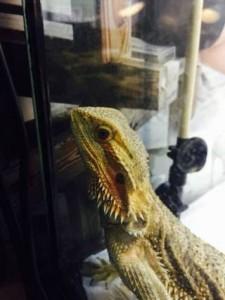 爬虫類を飼う時に紫外線ライトは必要?おすすめや設置効果のまとめ
