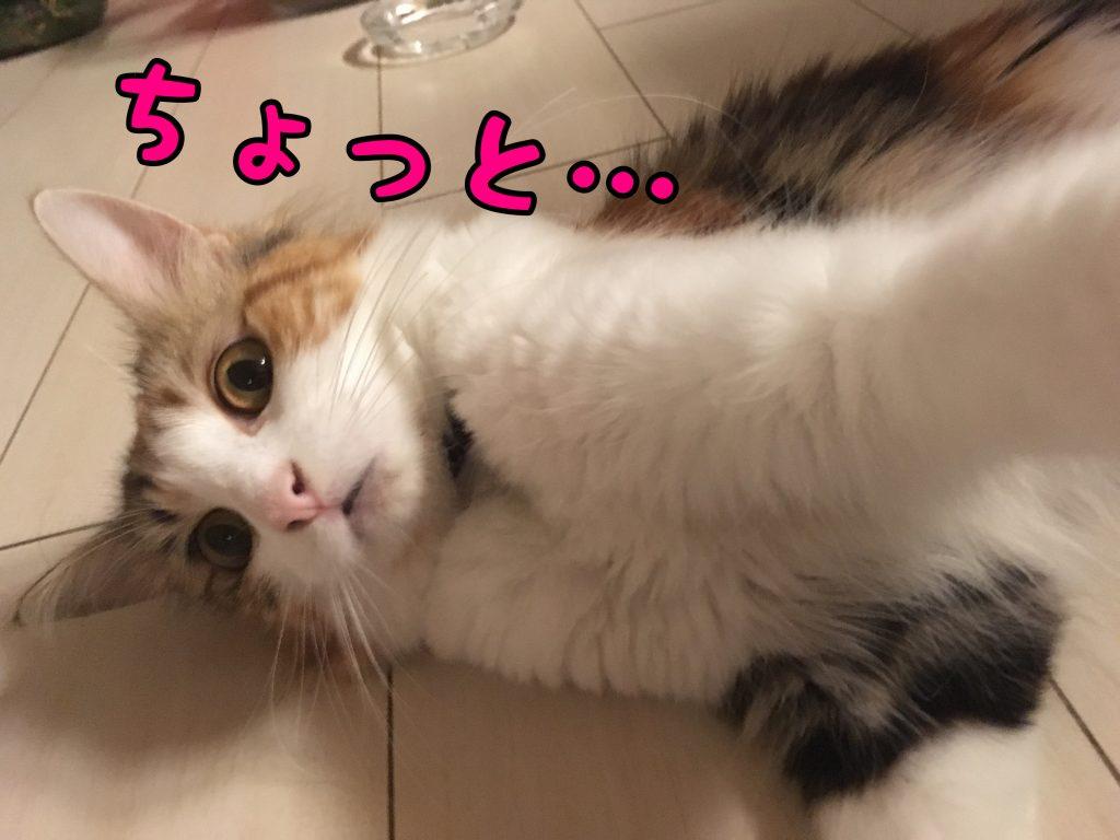 なぎさんのお食事シーン!!