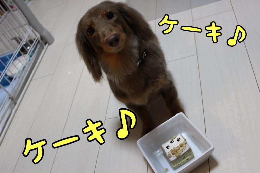 小太郎くんお誕生日!