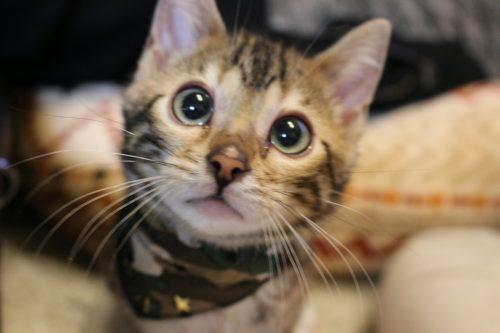 猫のトイレ決定版!猫砂&トイレのおすすめやしつけについてのまとめ【2019年版】