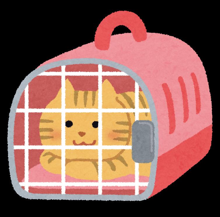 猫を飼う時にケージは必要?使いやすいケージやおすすめグッズを紹介